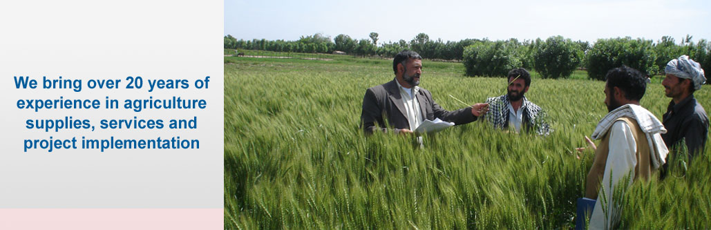 FAO field day to inspect NAG wheat seed farms